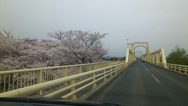 2020展勝地の桜